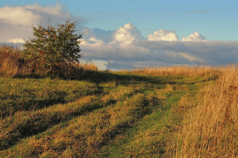На Мукачівщині в полі знайшли тіло 18-річного юнака