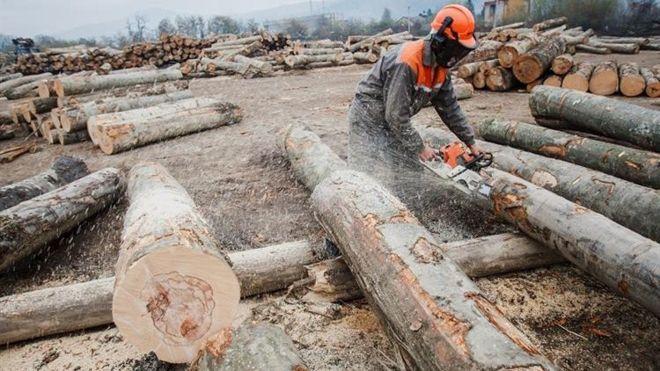 Через скандал з деревиною для Ikea на Закарпатті можуть звільнити сотні працівників (ФОТО)