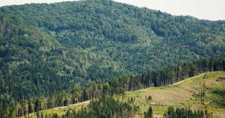 Закарпатські ліси інвентаризують