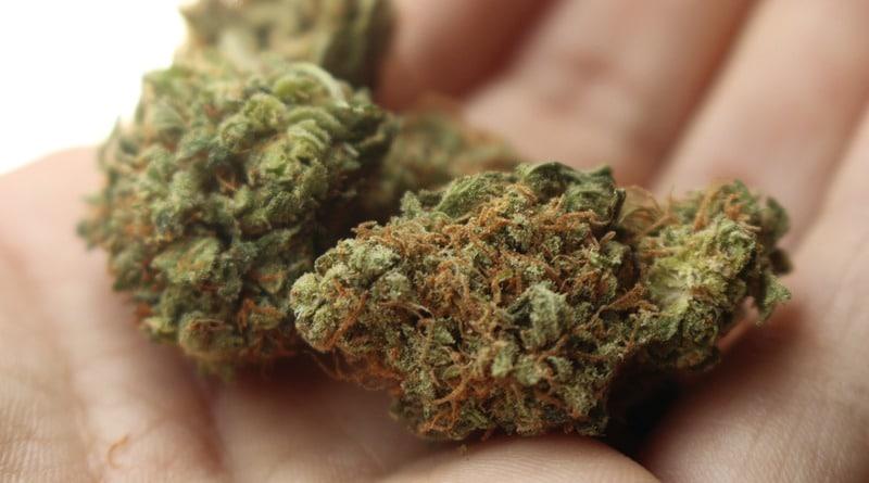 У мешканця Виноградівщини знайшли в сумці 50 г марихуани