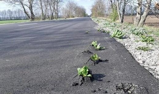 Підозрювана в крадіжці бюджетного мільйону компанія ремонтуватиме дороги Виноградівської ОТГ