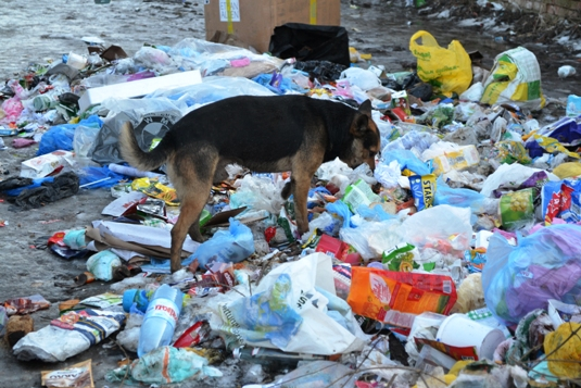 """Результат пошуку зображень за запитом """"Стихійне сміттєзвалище"""""""
