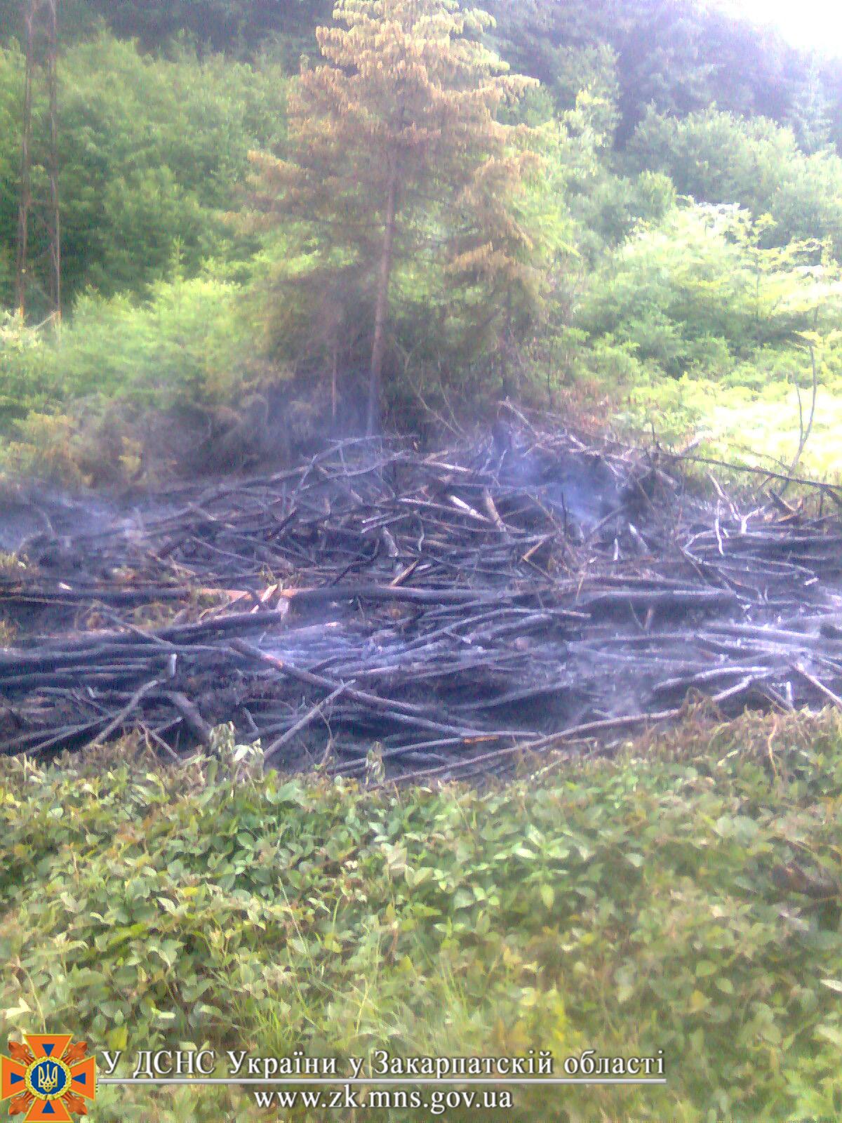 Через неприбране місце вирубки 2-річної давності  ледь не згорів ліс