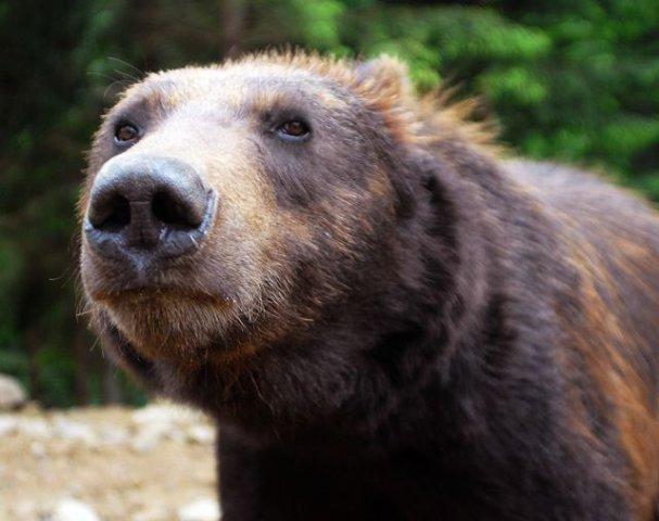 Центр бурих ведмедів