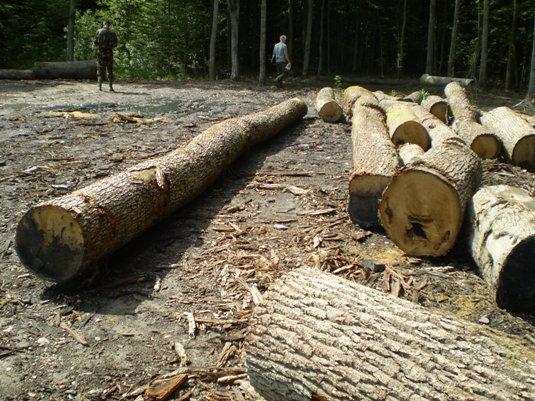 За результатами перевірки Виноградівського лісгоспу директора та заступника відомства просять звільнити