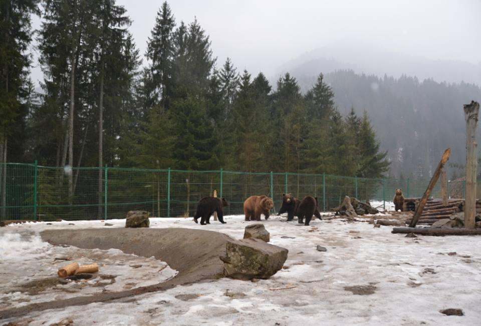 Картинки по запросу Центр реабілітації бурого ведмедя зима