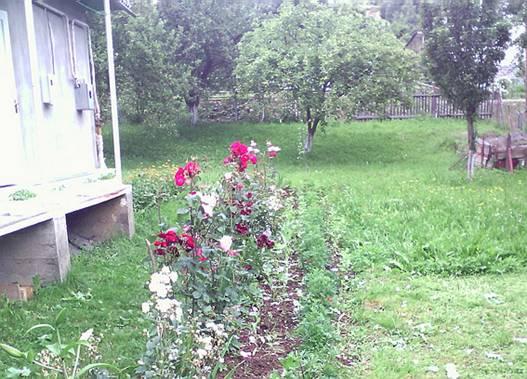 У 78-річного дідуся  вилучили 178 рослин маку (ФОТО)