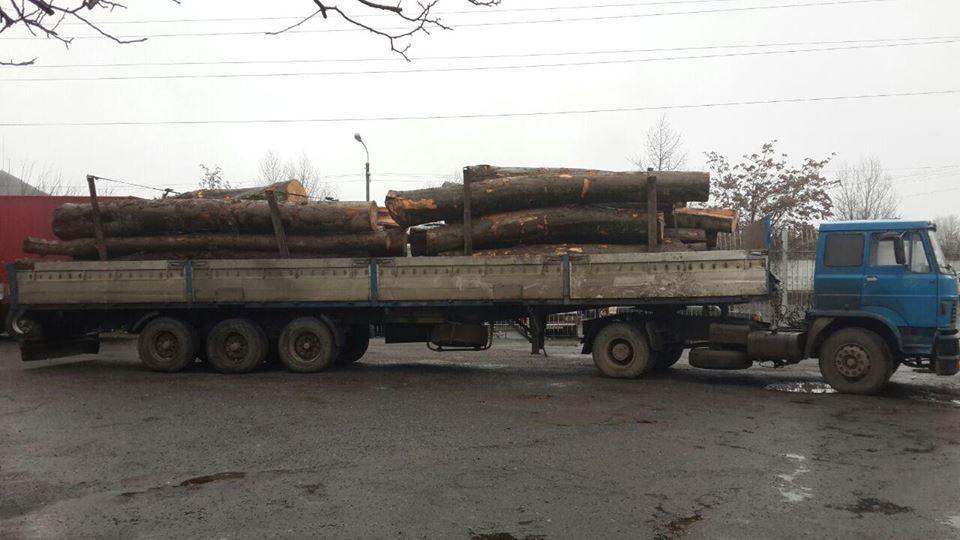 На Закарпатті поліція скаржиться, що незаконні вирубки лісу здійснюються