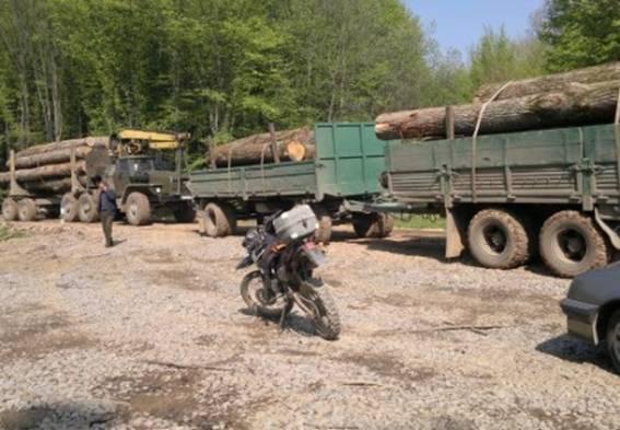 З початку року на Закарпатті зафіксовано понад півсотні нелегальних рубок лісу (ФОТО)