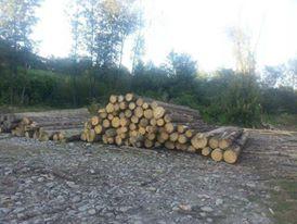 На Хустщині на незаконній лісопилці виявили понад 40 кубометрів смереки