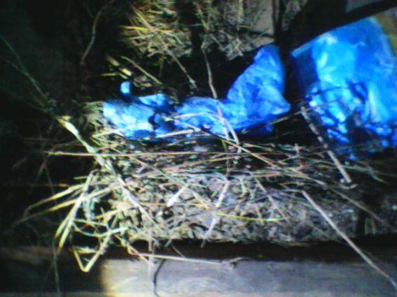 У ході обшуку будинку пенсіонерки вилучили понад 150 стебел маку та 4 використані шприци