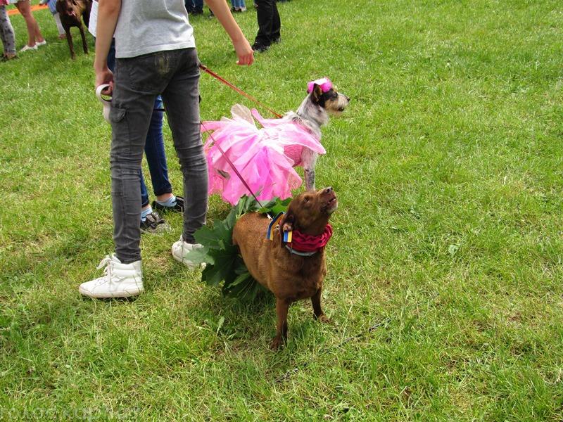 У Мукачеві пройшов Парад собак 2018 (ФОТО, ВІДЕО)