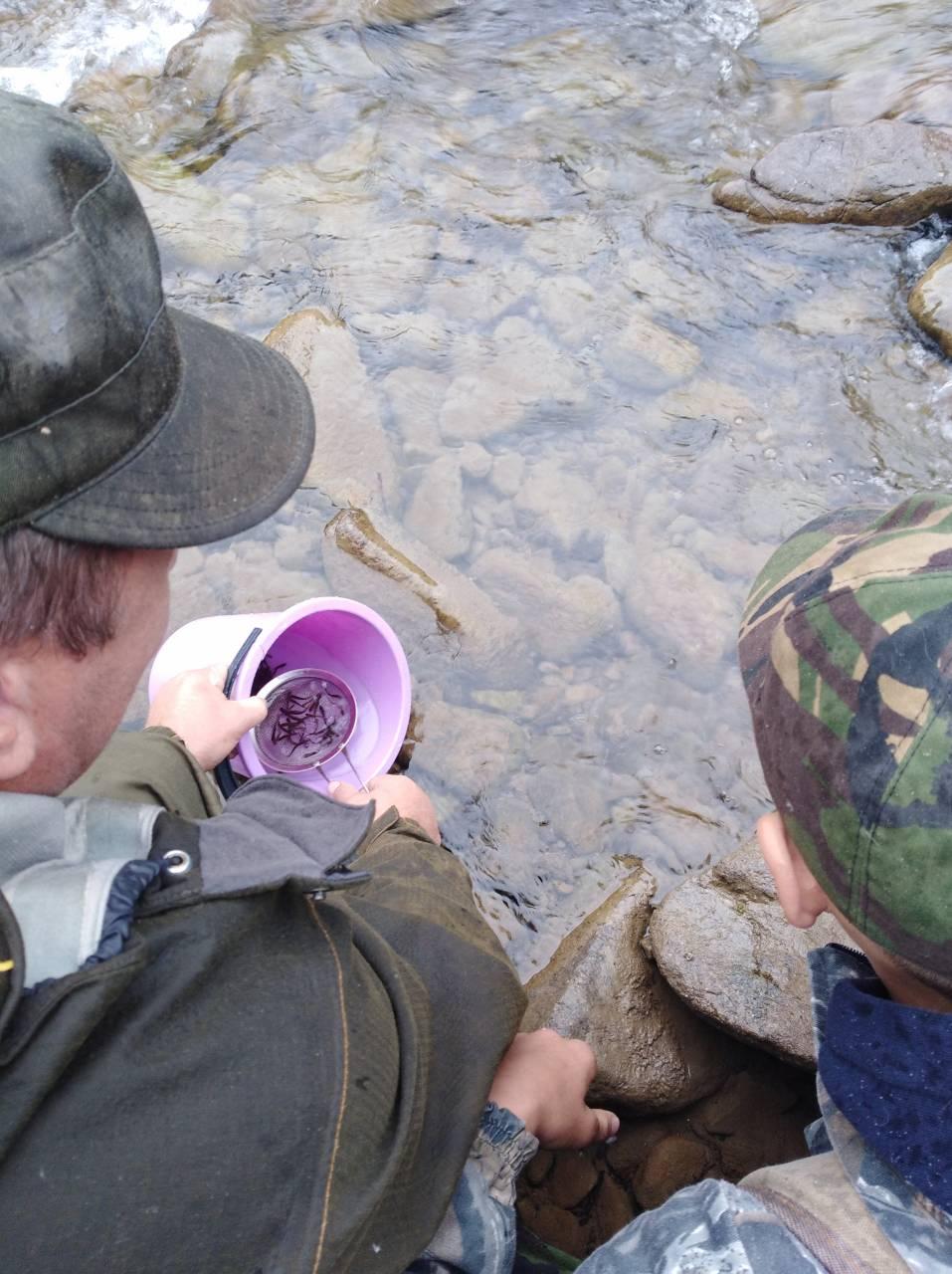 12 тисяч мальків форелі запустили у гірські струмки Рахівщини (ФОТО)