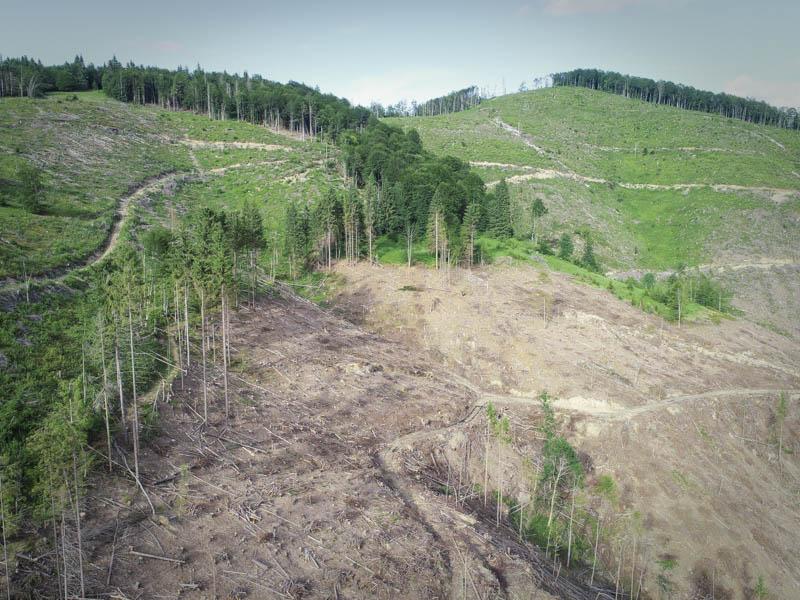 На Закарпатті намагалися приховати масштаби суцільно зрубаного лісу