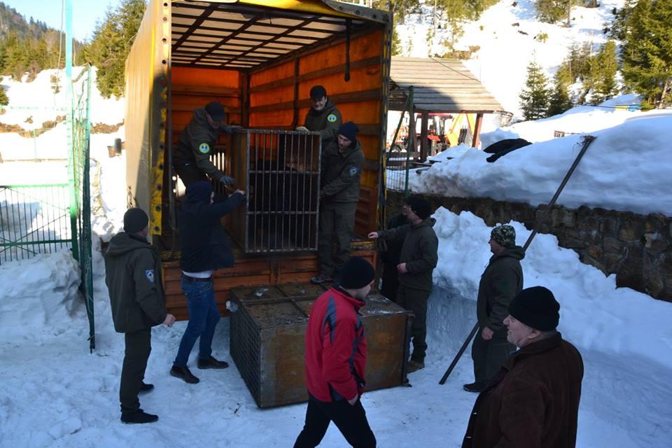 П'ятеро клишоногих з Донеччини тимчасово оселилися в реабілітацiйному центрі на Закарпатті (ФОТО), фото-1
