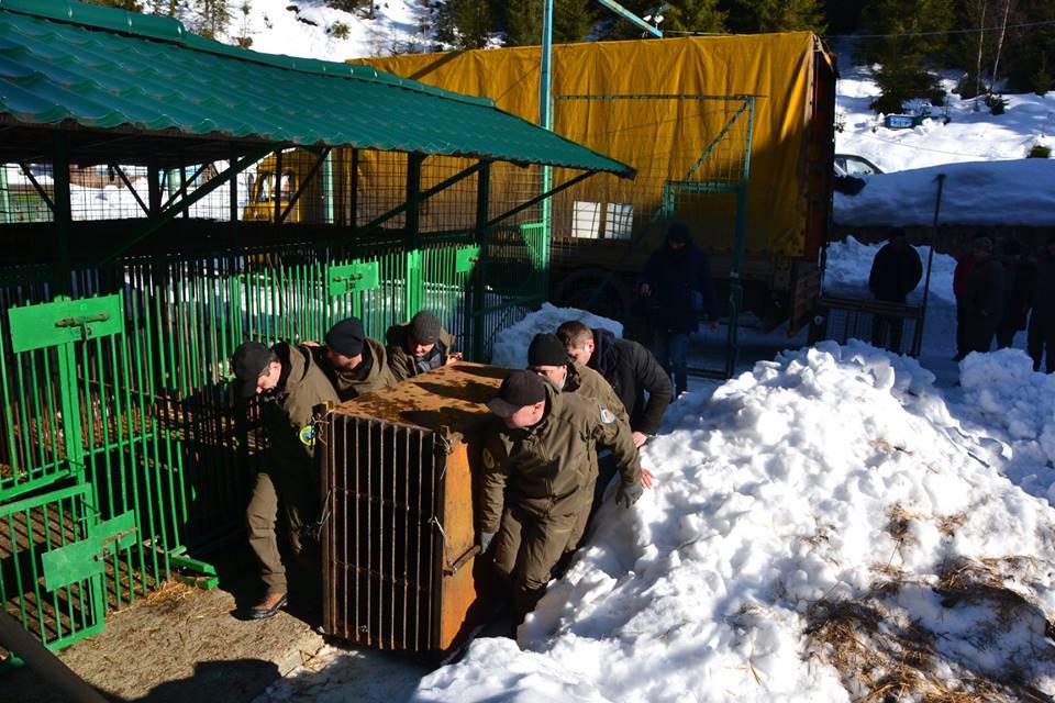 П'ятеро клишоногих з Донеччини тимчасово оселилися в реабілітацiйному центрі на Закарпатті (ФОТО), фото-2