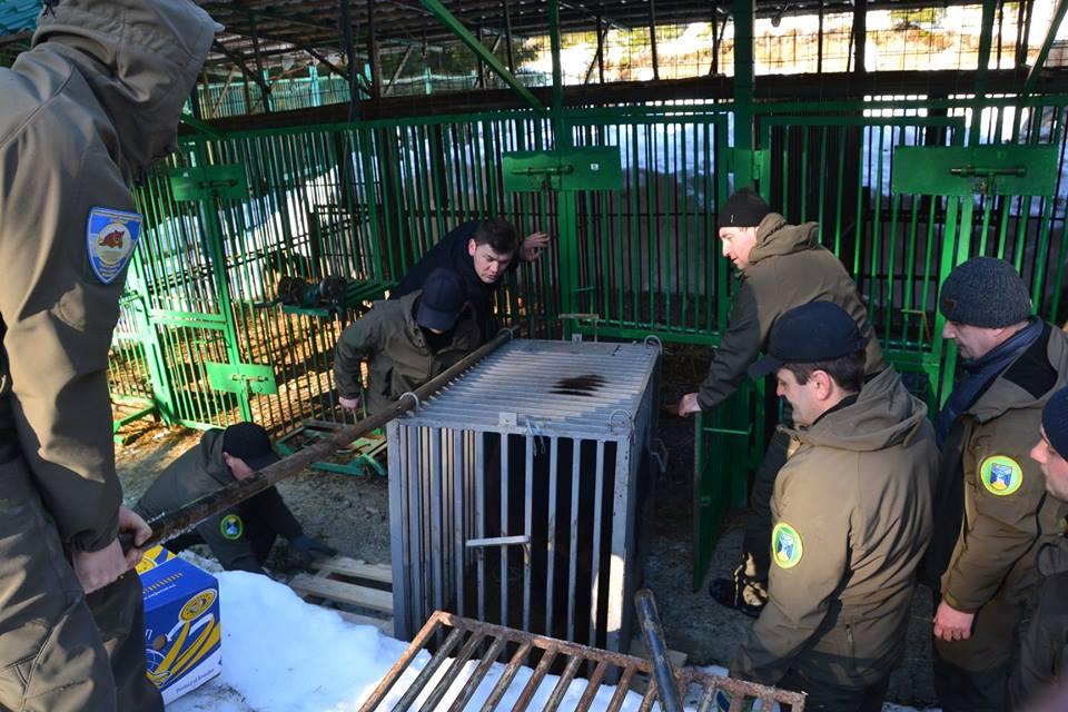 П'ятеро клишоногих з Донеччини тимчасово оселилися в реабілітацiйному центрі на Закарпатті (ФОТО), фото-3