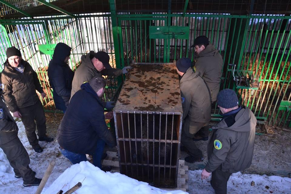 П'ятеро клишоногих з Донеччини тимчасово оселилися в реабілітацiйному центрі на Закарпатті (ФОТО), фото-4