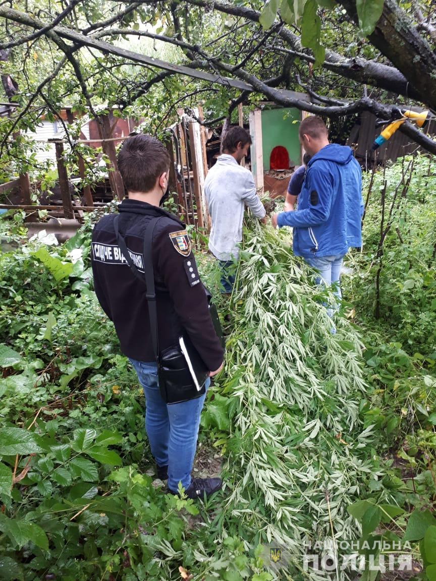 """200 рослин конопель виростив мешканець Ужгородщини: """"садівник"""" перебуває в ізоляторі (ФОТО), фото-2"""