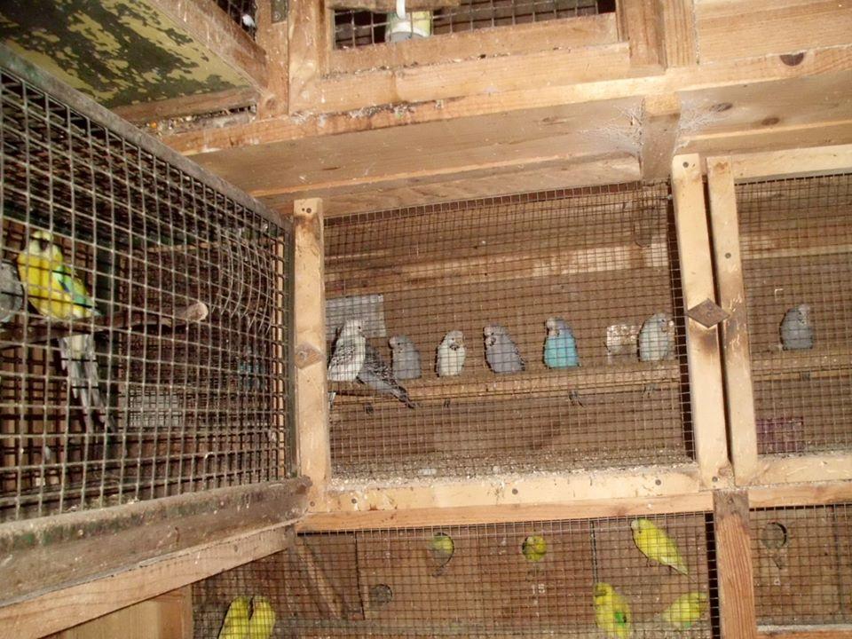 Мешканець Колочави  утримує екзотичний птахопарк
