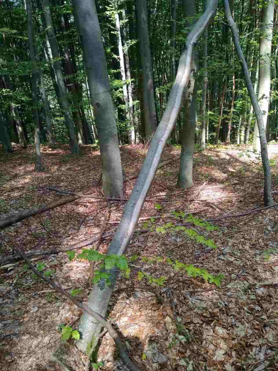 Тячівський лісгосп заплатить штраф за порушення природоохоронного законодавства (ФОТО)