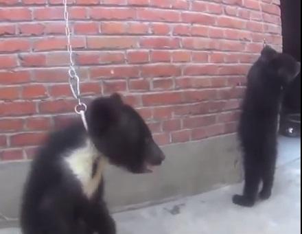 Ужгородці через електронну петицію ініціюють заборону гастролей цирків, які використовують тварин