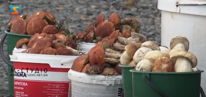 Цьогоріч осінній грибний сезон на Закарпатті – не надто щедрий (ВІДЕО)