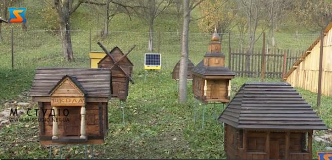 Карпатська школа бджільництва діє у Колочаві