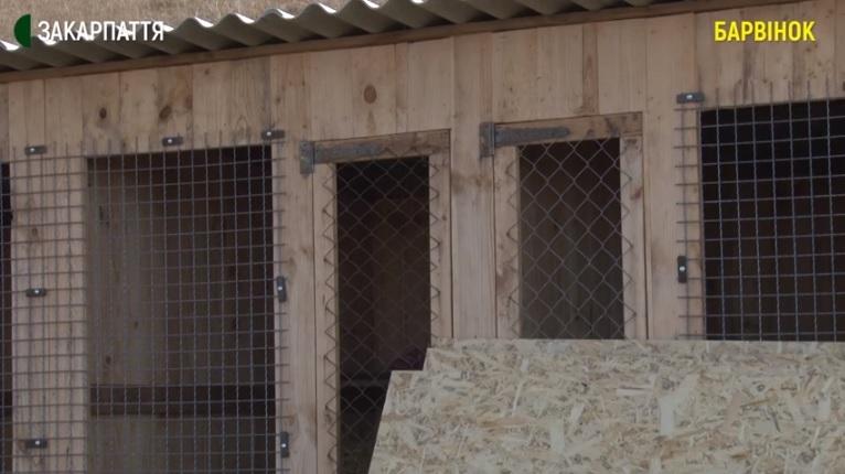 У Барвінку під Ужгородом волонтери будували вольєри для безпритульних тварин (ВІДЕО)